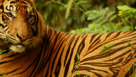WWF – World Wide Fund for Nature Internships