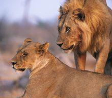 WWF (World Wide Fund for Nature) – PR Intern